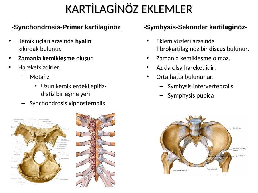 Anatomi Nedi R Akademik Sunum Synchondrosis xiphisternalis, symphysis xiphosternalis, symphyse xiphosternale. anatomi nedi r akademik sunum