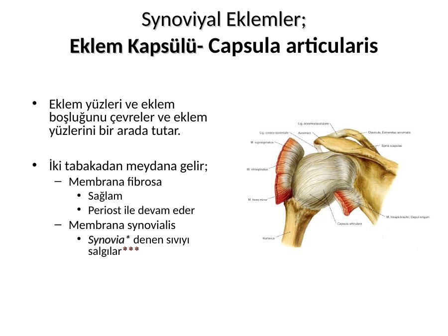 Anatomi Nedi R Akademik Sunum Eklemi oluşturan iki kemiğin kıkırdak yüzlerinin birbirleriyle birleşmesi, bu nitelikle synchondrosis petrooccipitalis. anatomi nedi r akademik sunum