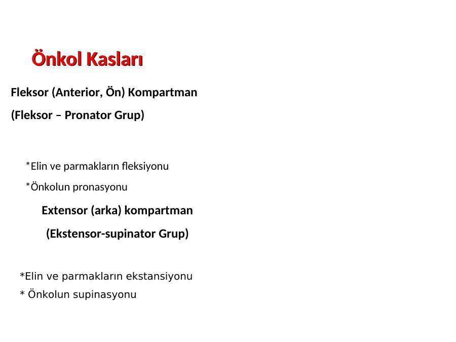 Anatomi Nedi R Akademik Sunum Xiphisternal joint, xiphisternal symphysis, xiphisternal synchondrosis. anatomi nedi r akademik sunum